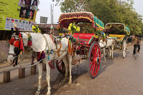 India Buying Trip - Glenhaven Home & Garden
